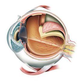 Veja o infográfico - Como o olho funciona